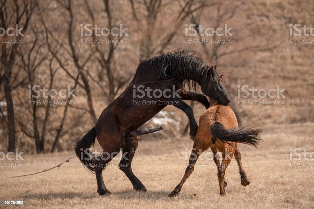 Horse having sex Nude Photos 4