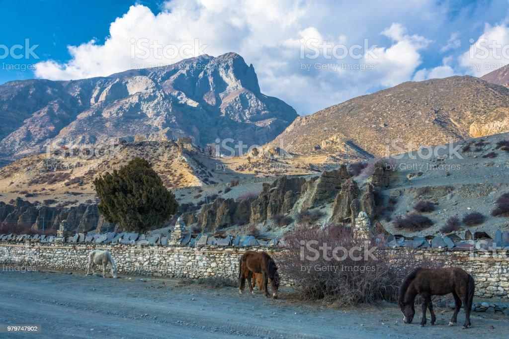 Horses in a beautiful mountain landscape, Nepal. стоковое фото