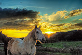 Horses in a farm at sunset