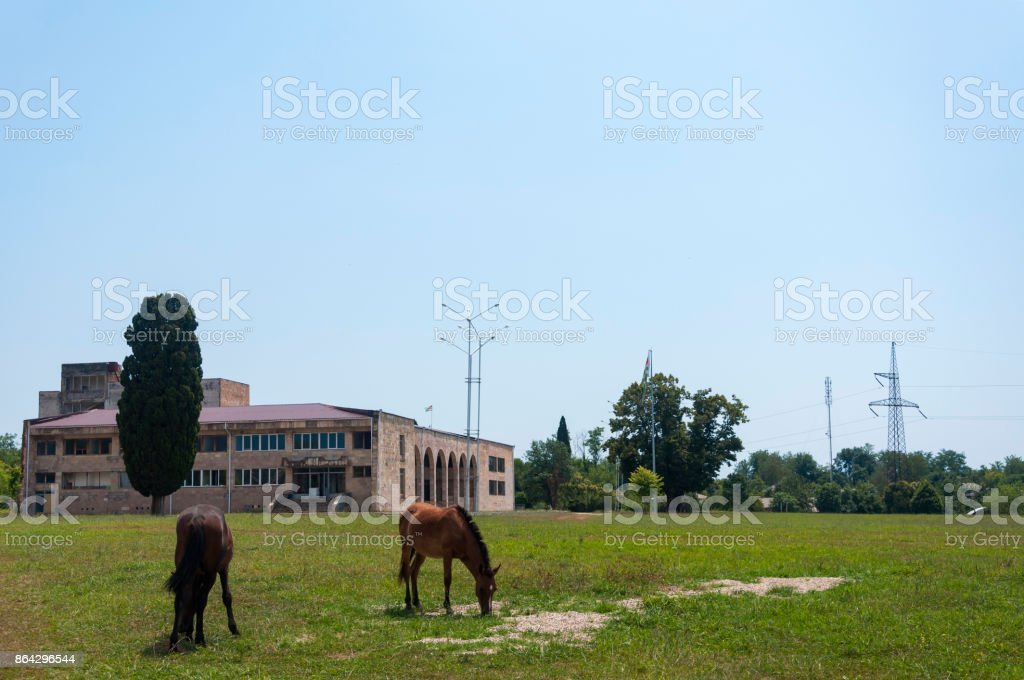 Horses in a glade in Abkhazia royalty-free stock photo