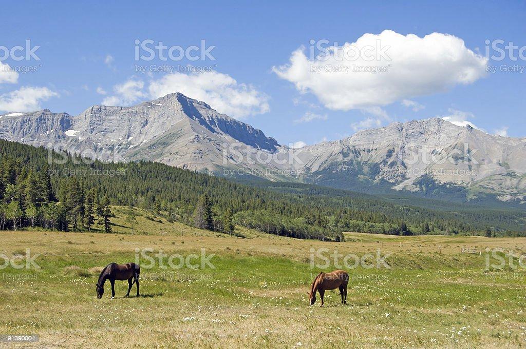 Horses in a High Mounain Setting royalty-free stock photo