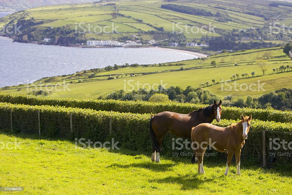 Horses in a holiday setting - Northern Ireland stock photo