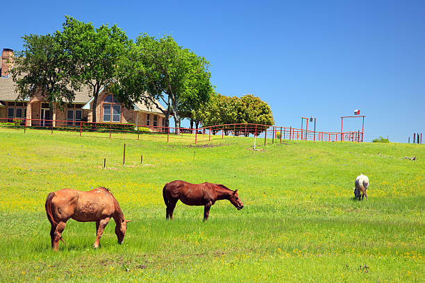 Horses in a ranch on s sunny day stock photo