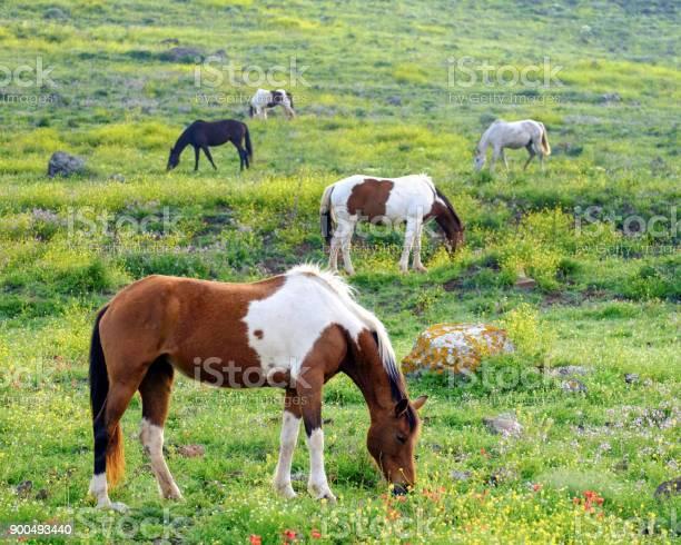 Horses in a spring picture id900493440?b=1&k=6&m=900493440&s=612x612&h=6on8cqgdgl6f08lb3 w 308dqcsmxt vz0n7g2g0eco=