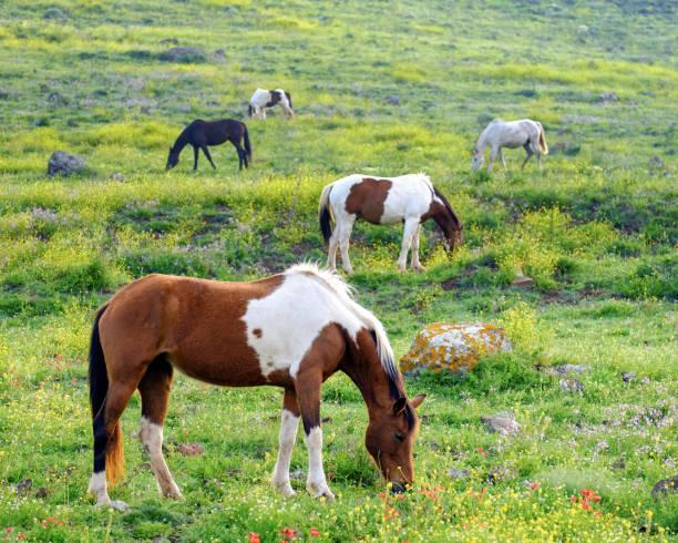 Horses in a spring picture id900493440?b=1&k=6&m=900493440&s=612x612&w=0&h=n01n21yszftijbu0o6 ul3dhpiugnhu37rjmacsxxzi=
