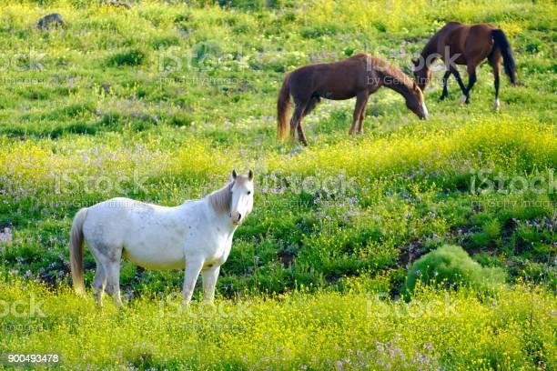 Horses in a spring picture id900493478?b=1&k=6&m=900493478&s=612x612&h=xwt2anlcnannmz9ic2c8bkr4vay 0esdmgirsad1sry=