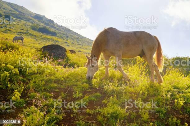 Horses in a spring picture id900493518?b=1&k=6&m=900493518&s=612x612&h=iwrast7zq4de06 53n5m6o7lk20e7rldml375l2h qg=