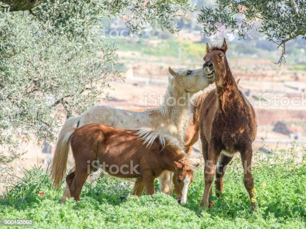 Horses in a spring picture id900493568?b=1&k=6&m=900493568&s=612x612&h=hwnxoqwskss8ubygamwx3mym 41ccegnxmuuvlb192e=