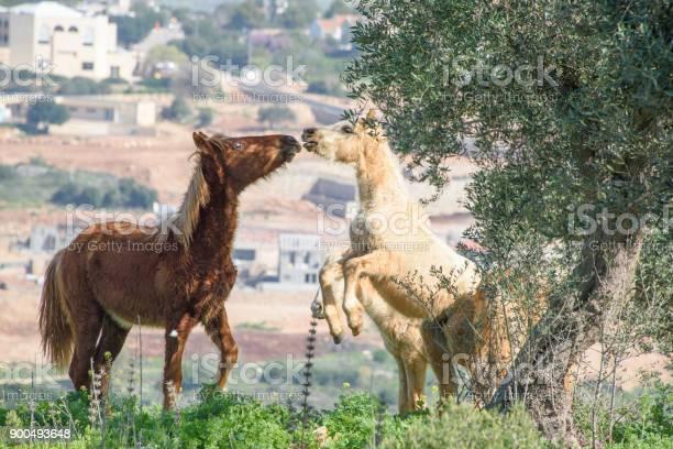 Horses in a spring picture id900493648?b=1&k=6&m=900493648&s=612x612&h=a2ql8d1imlvb1if9xqsch4nqq 0lj8gpepmmyq7fhhk=