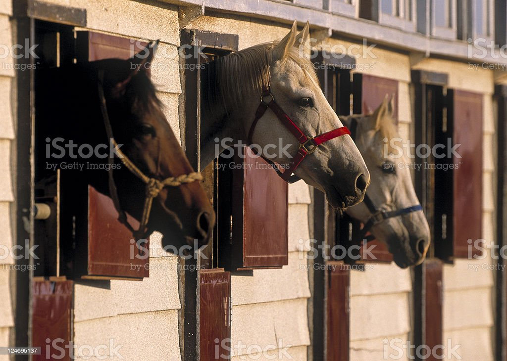 Horses in a stable royalty-free stock photo