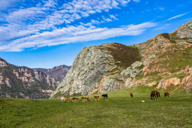 Horses in a valley – zdjęcie