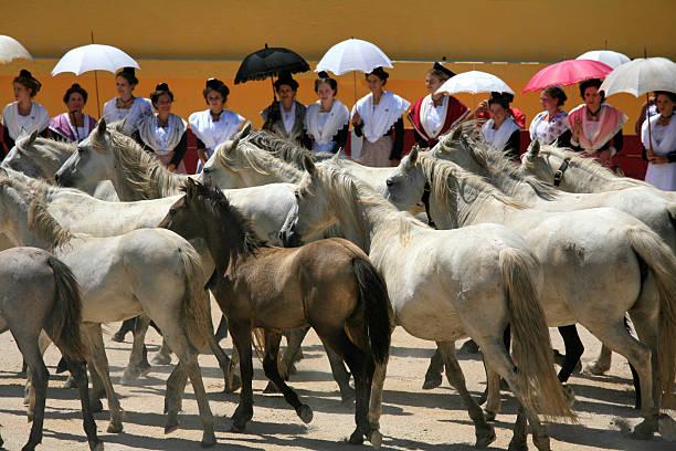 Pferde in der arena, Saintes-Maries-de-la-Mer, Frankreich, Camargue – Foto