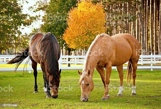 Photo of Horses in Autumn