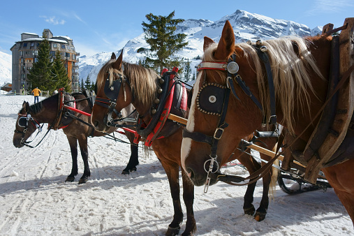 Horses in Avoriaz ready to pull the sleigh.