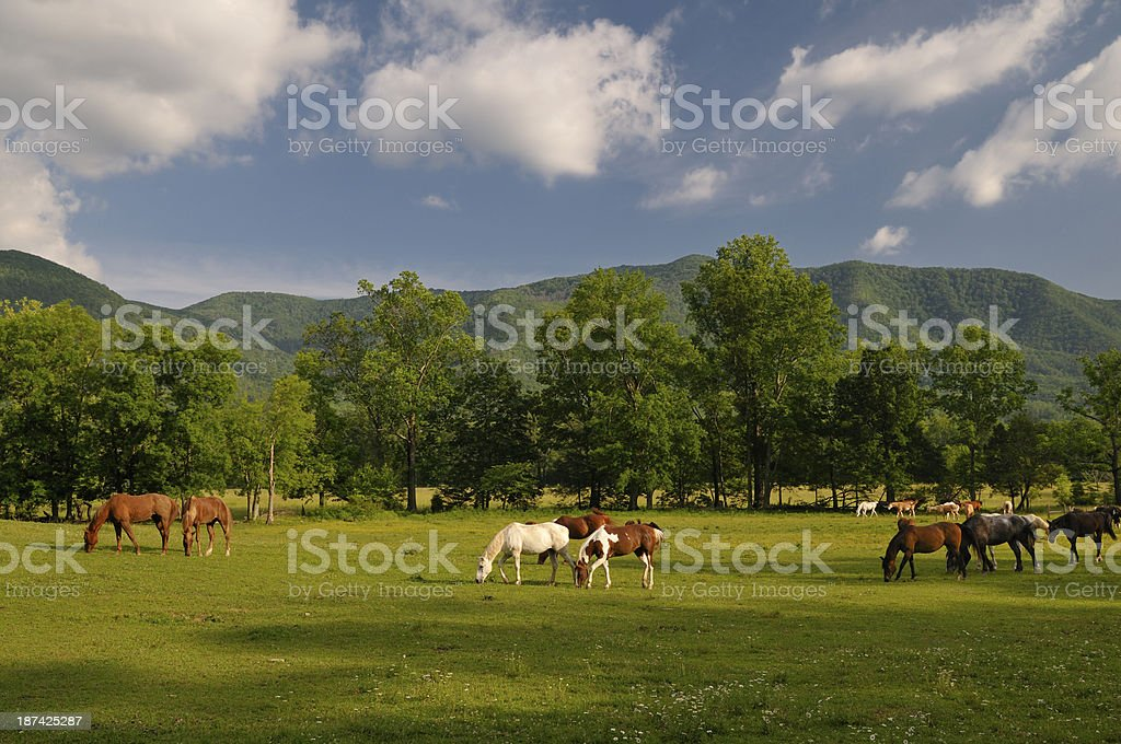 Horses in Cades Cove at Smoky Mountains National Park royalty-free stock photo