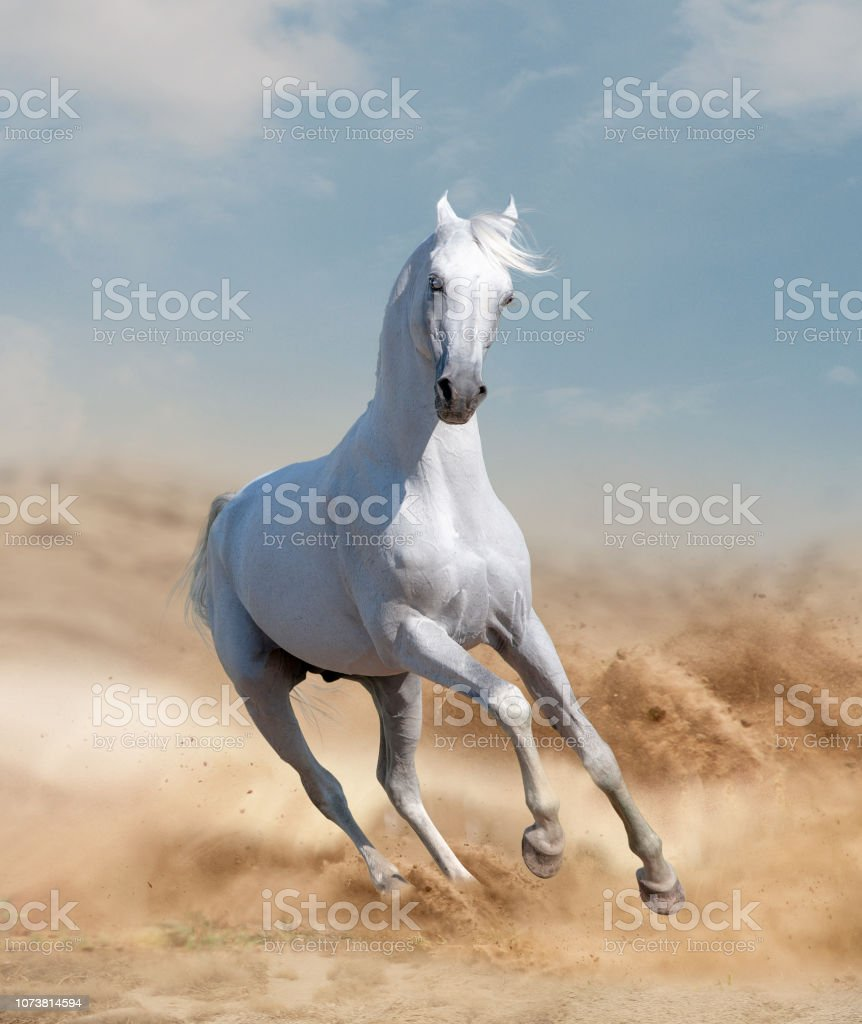Horses in desert stock photo