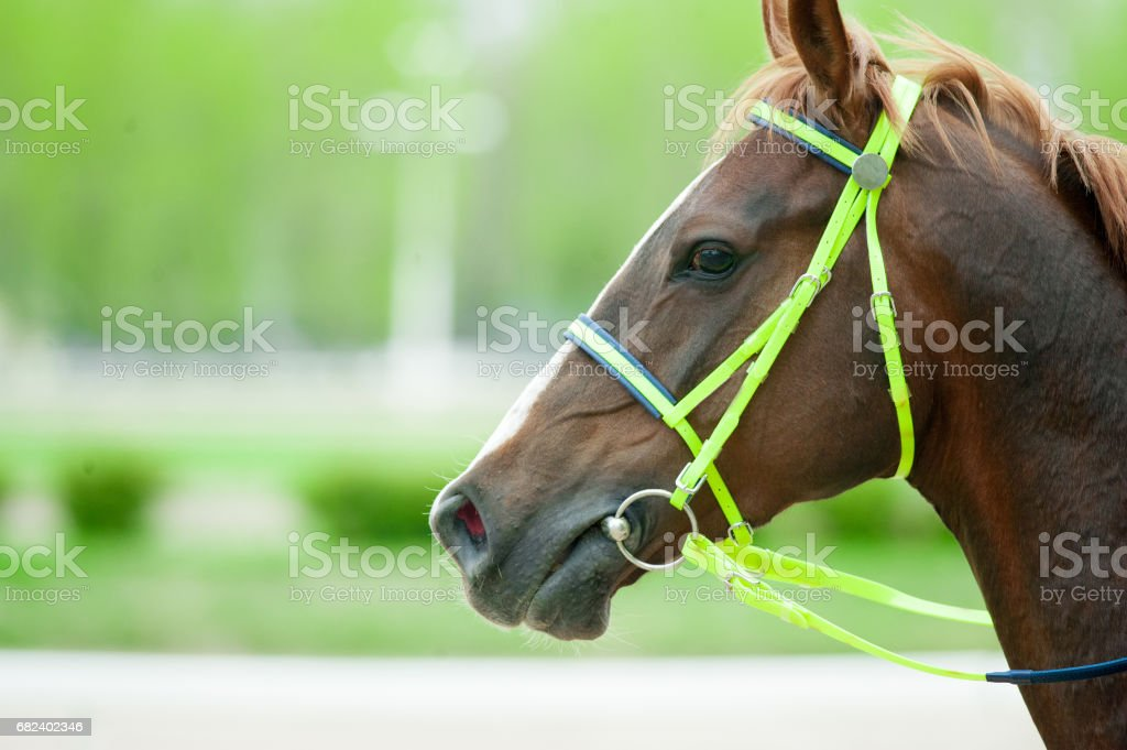 Horses in details royalty-free stock photo