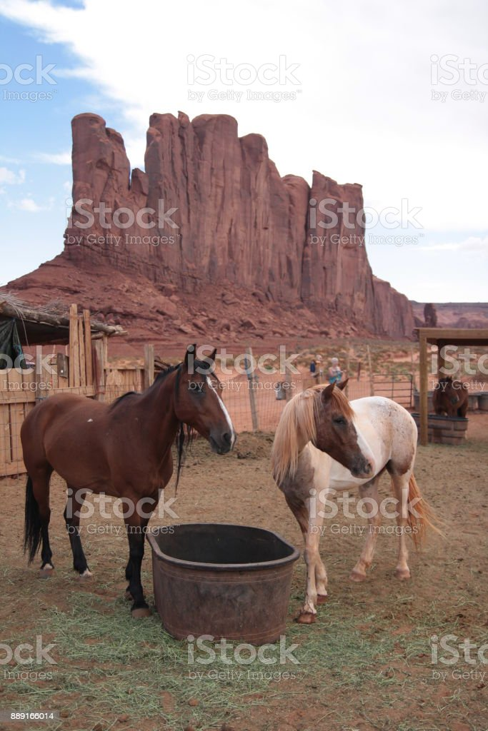 Horses drinking from a bucket in Monument Valley Navajo tribal Park.
