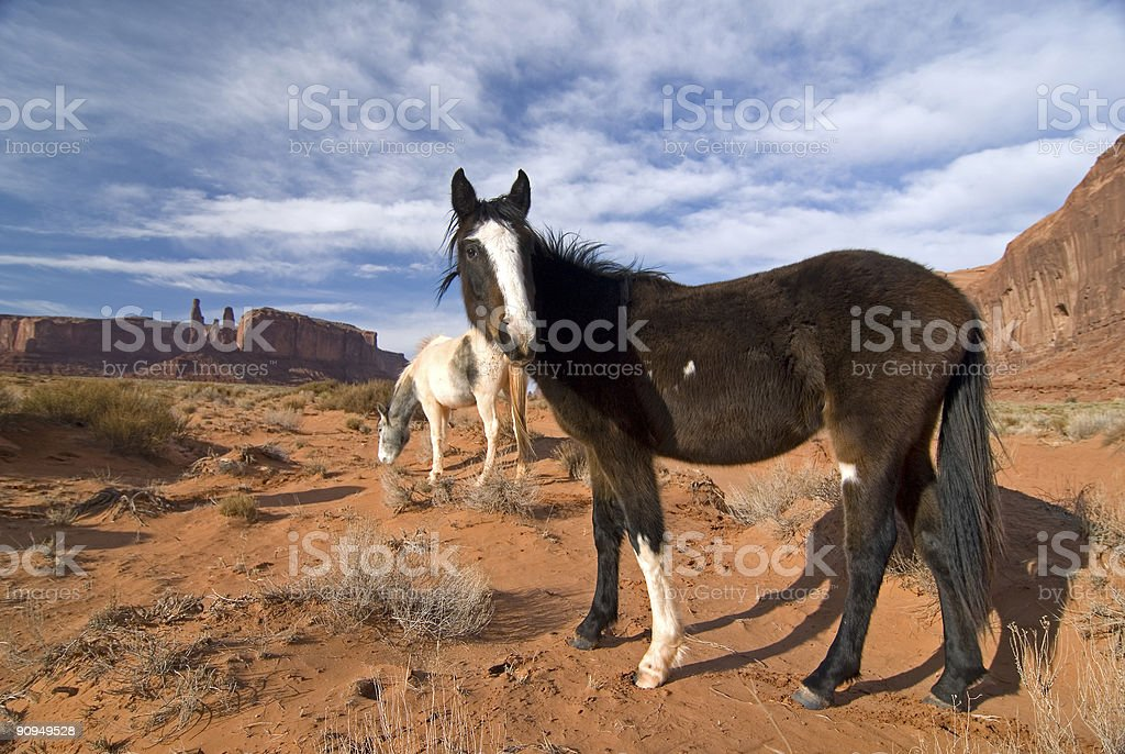 Horses in Monument Valley royalty-free stock photo
