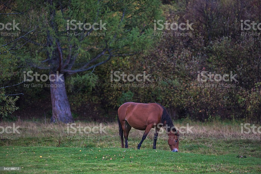 Horses in mountain ranch stock photo