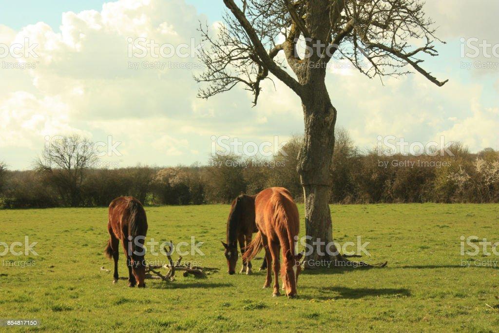 Horses in pasture in a farm enclosure