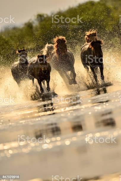 Horses in river picture id847029916?b=1&k=6&m=847029916&s=612x612&h=4uo6wtbsitf3tdvzts2e92pzjcn1pyyke1hznn3xpx0=