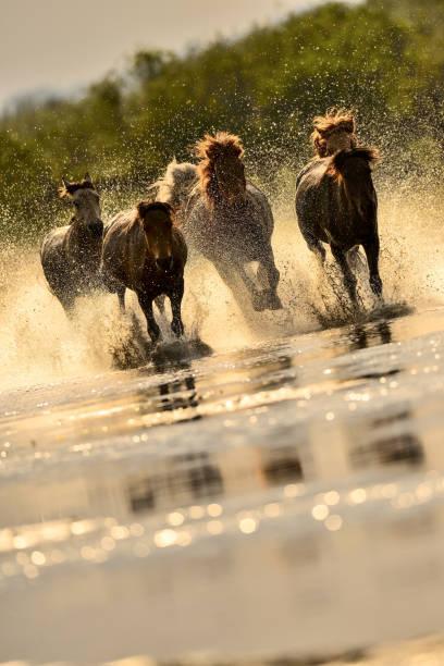 Horses in river picture id847029916?b=1&k=6&m=847029916&s=612x612&w=0&h=azod1m1yyflhkyo7glyx6rj12gfd9kn4yurrcsygsb0=