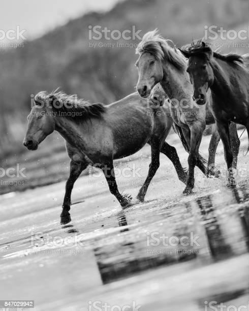 Horses in river picture id847029942?b=1&k=6&m=847029942&s=612x612&h=aojwv3exgwrmqp8o0xfbs3rpqghv po2uolhcptreju=