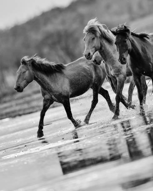 Horses in river picture id847029942?b=1&k=6&m=847029942&s=612x612&w=0&h=yzot1rmvaoizkjxa5ygt2yq xukoqev2r t8bdsvao4=