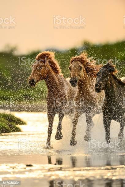 Horses in river picture id847030034?b=1&k=6&m=847030034&s=612x612&h=3k0bwr2bbngpntw3attn9ik85a8j2o9ijdad6ucsm2i=