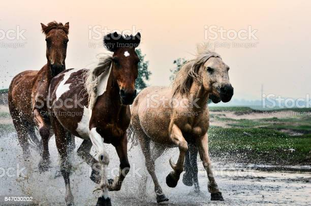 Horses in river picture id847030202?b=1&k=6&m=847030202&s=612x612&h=vrsy040accx5d2 pmcl c0pubphztzf94kpzsknvncw=