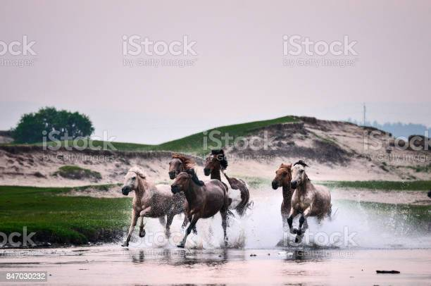 Horses in river picture id847030232?b=1&k=6&m=847030232&s=612x612&h=ianlvcnsbs djpj9463jme2cbgfflzxzg imaq wnio=