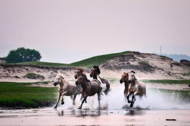 Horses in river picture id847030232?b=1&k=6&m=847030232&s=612x612&w=0&h= 8pkimyhbqka6zvvifcgwlgmvmf srcxeqp2aq9cst8=