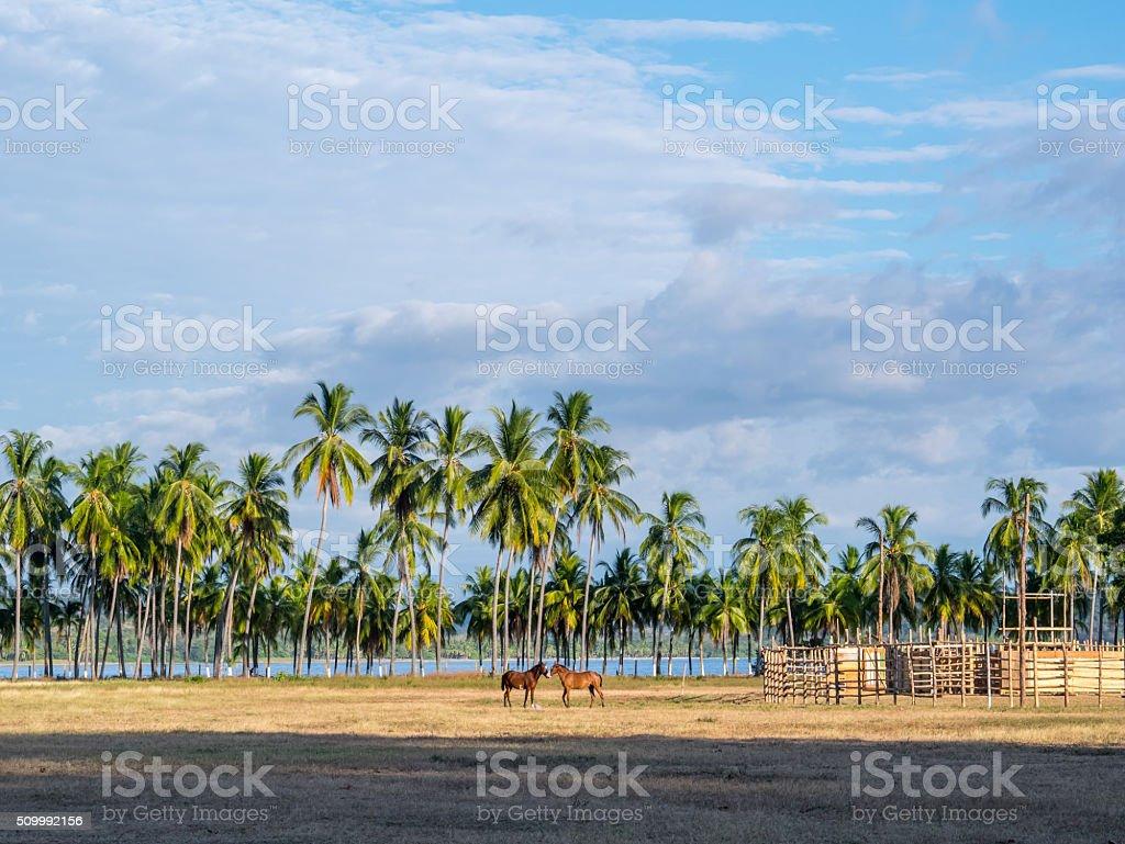 Horses in Samara royalty-free stock photo