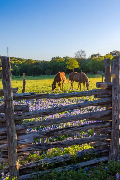 Horses in spring picture id1021202184?b=1&k=6&m=1021202184&s=612x612&w=0&h=wxj8ycgyuufayigewsprkrnfplf2ajvfxepd0ll4qho=
