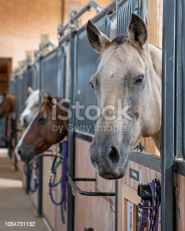 Horses sticking their heads out of their stall doors with diminishing perspective