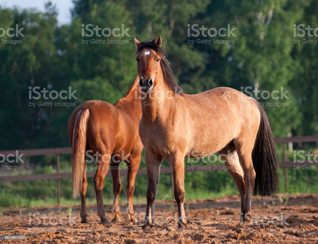 Horses in summer stock photo