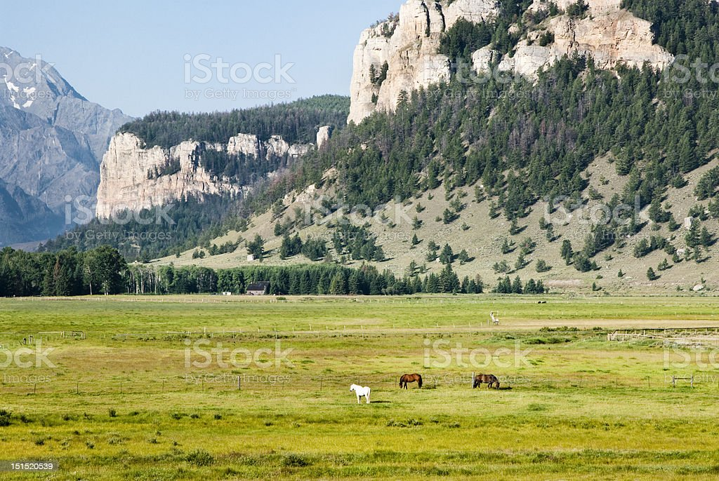 Horses in Sunlight Basin stock photo