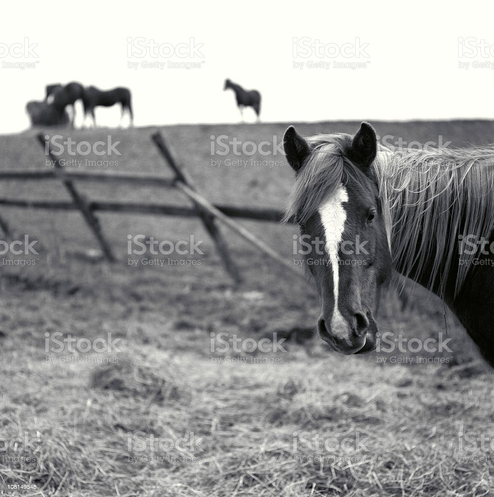 Horses in the field royalty-free stock photo