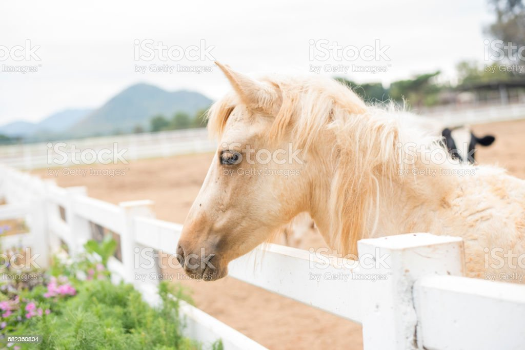 horses in the field royalty free stockfoto