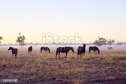 Brown horses in the fog at sunrise