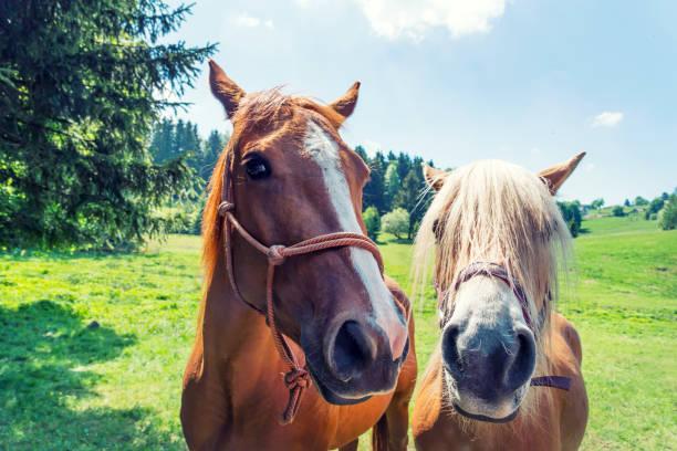 Pferde auf der Wiese im Sommer – Foto