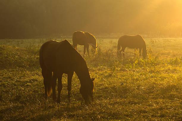 Pferde in der Morgensonne – Foto