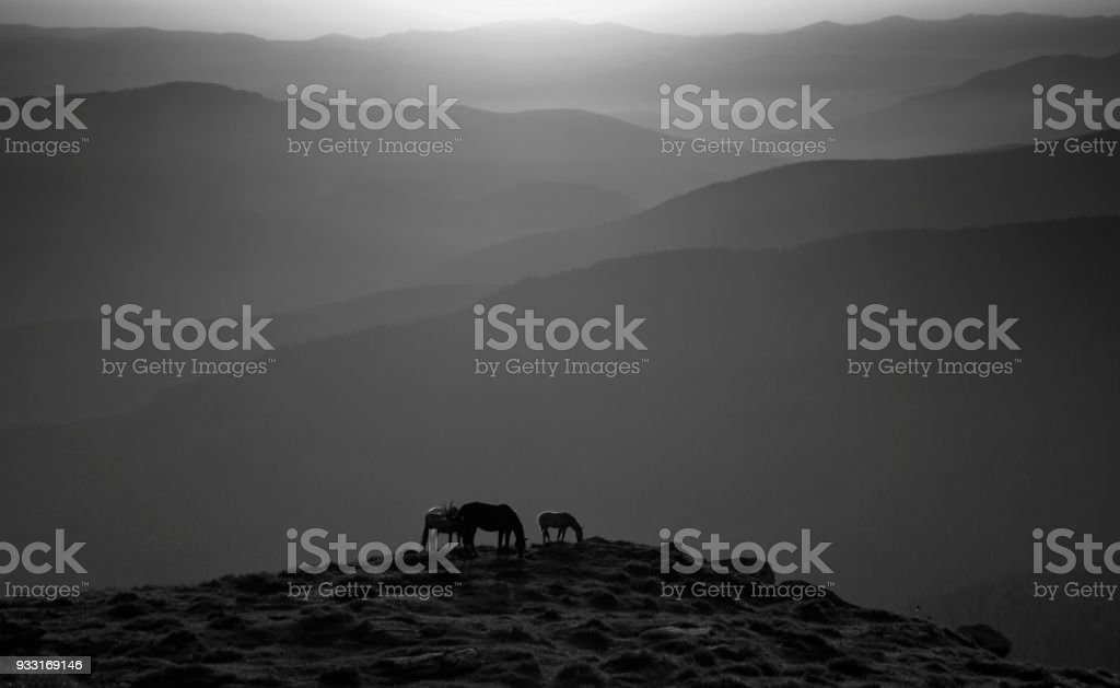 Horses in the mountian stock photo