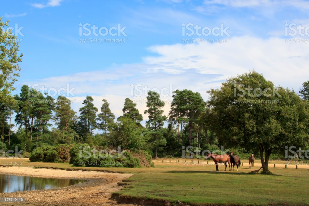 Horses in the New Forest landscape, England stock photo