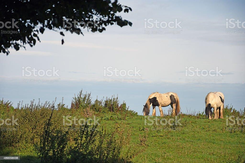 Horses in the Sky stock photo