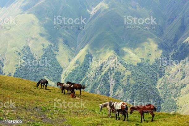 Horses in the valley landscape and wildlife scene in georgia picture id1249842920?b=1&k=6&m=1249842920&s=612x612&h= z0v6coujebvs3zo77 kbcmzmdrnlo90az1x0ikdtec=