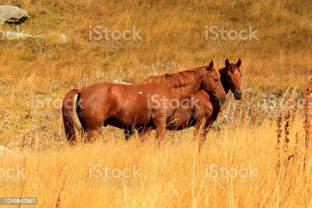 Horses in the valley landscape and wildlife scene in georgia picture id1249842951?b=1&k=6&m=1249842951&s=612x612&h=2lrky8qtej4hwtnigyxoeia qqvsuqb9ffcjtcgla3q=