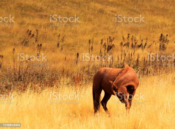 Horses in the valley landscape and wildlife scene in georgia picture id1249843004?b=1&k=6&m=1249843004&s=612x612&h=guokqrl2o7wp1qe0lzfvc1dzkmjilovjiy2fpykjrry=