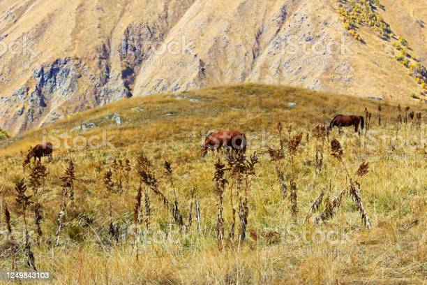 Horses in the valley landscape and wildlife scene in georgia picture id1249843103?b=1&k=6&m=1249843103&s=612x612&h=qv2iifo7lligfsmbhnnl0u6yfarrqvzy29skvowre5e=